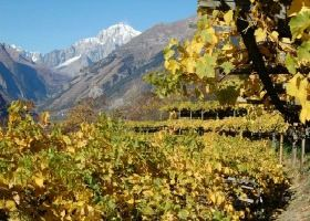 Mountain wine growers: the Aosta Valley experience